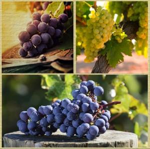 Vinho-Varietal-e-Blend