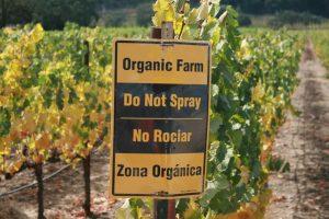 producao-vinho-organico