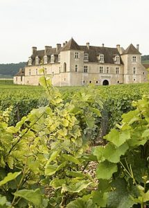 vineyard-chateau-bourgogne-burgundy-17626271