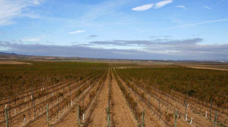 Vinhas cultivadas nas Bodegas Domeco de Jarauta