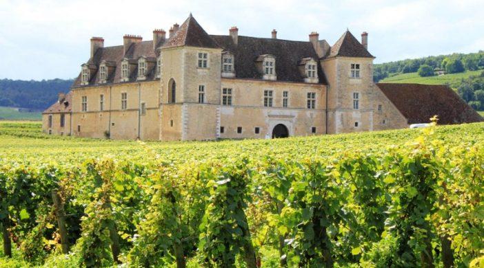 Vinhas de Pinot Noir em Borgonha