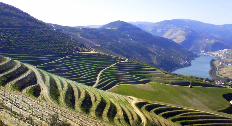 O Vale do Douro é responsável pelo surgimento de uma das bebidas mais tradicionais de Portugal, o Vinho do Porto.