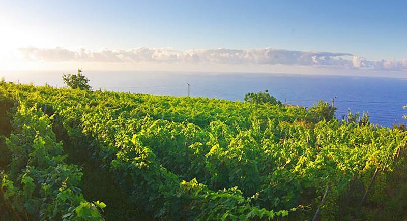A Ilha da Madeira é capaz de produzir os vinhos mais duradouros do mundo