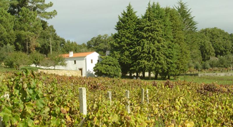 Quinta do Sobral, situada na terra mais famosa do Vinho do Dão