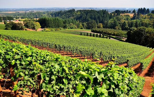 regiões produtoras da Chardonnay